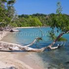 Coastal Rainforest, bay, Chiriya Tapu, South-Andaman, Andaman Islands, India