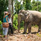 Working Elephant and tourist, Havelock, Andaman Islands, India
