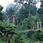 suspension bridge in rainforest, Danum Valley, Sabah, Malaysia, Borneo