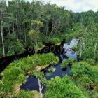 rainforest of Tanjung Puting Nationalpark Borneo, Indonesia