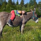 family-hiking with a donkey in the Cevennes mountains, France