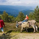 family-hiking with a donkey in the Cevennes mountains, Mont Lozere, France