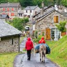 family-hiking with a donkey in the Cevennes mountains, Pomaret, France