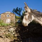 family-hiking with a donkey, Gite d' Etape Castagnols, Cevennes, France