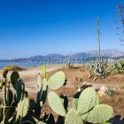 beach near Gythio with agava, Agava americana and opuntia, Opuntia ficus-indica, Peloponnese, Greece, Europe