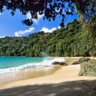Sandy beach and rainforest, Pirate's Bay near Charlotteville, Tobago, West Indies, South America