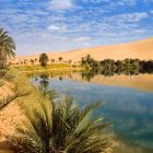 Mandara Lakes in the dunes of Ubari, oasis Um el Ma, libyan desert, Libya, Sahara, North Africa