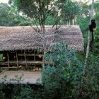 House of the german scientist Bernhard Meier in the rainforest of Ranomafana and Milne Edwards Sifaka, Madagascar