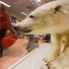 stuffed Polarbear in airport of Longyearbyen, Spitsbergen, Svalbard, Norway