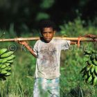 Papua boy carrying bananas in tropical rainforest, Salawati Island, West Papua, New Guinea, Indonesia