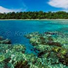 corals off Rani Island and rainforest, West Papua, New Guinea, Indonesia