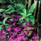 flowers on rainforest floor, tropical rainforest, West Papua, New Guinea, Indonesia
