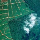 Young oilpalm-plantation replaces rainforest, Borneo, Indonesia