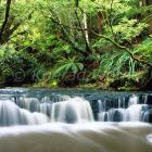 Rainforest, Purakaunui River, Catlins, South Island, New Zealand