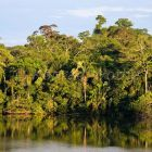 Rainforest at Tambopata river, Peru, South America