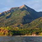 Mahale Mountains National Park, Rainforest, Tanzania, East Africa