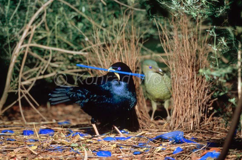 Australien Moments Of Nature Konrad Wothe